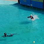 水スキー2